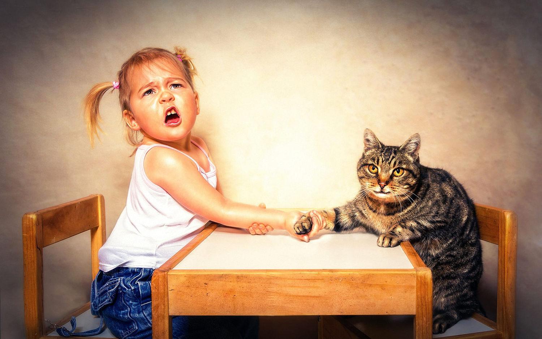 картинки с котами как люди стеклянные