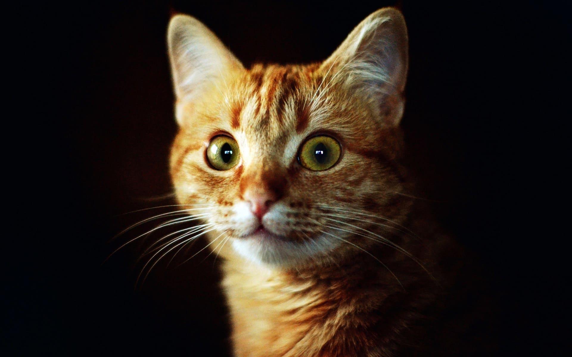 Крестины, смешные картинки с рыжими кошками