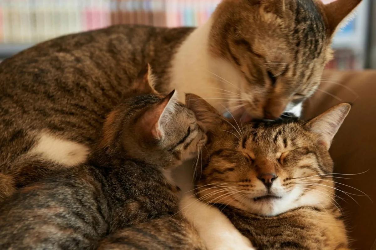аарон любящие друг друга кошки картинки дана