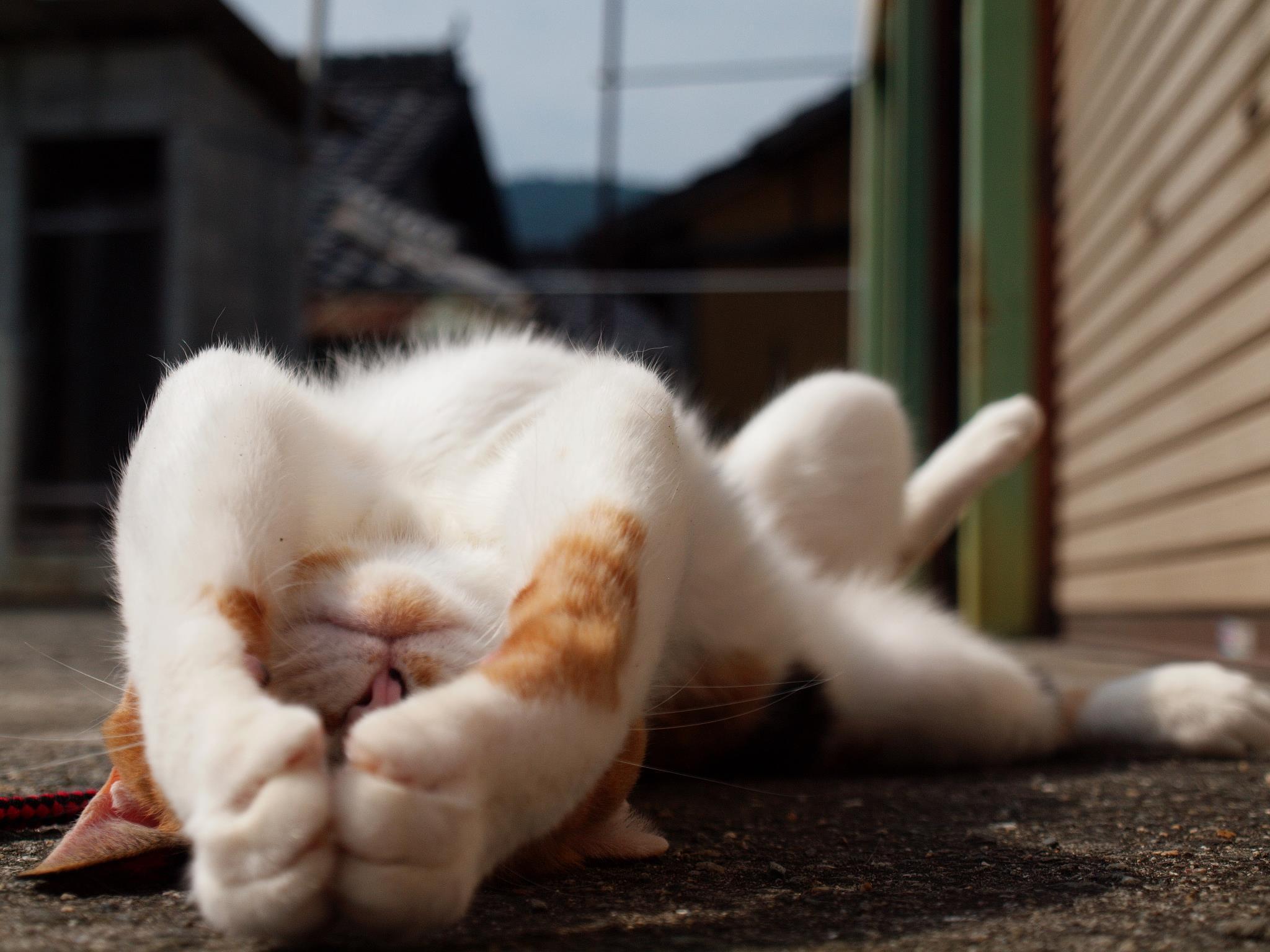 Картинка кота ленивого