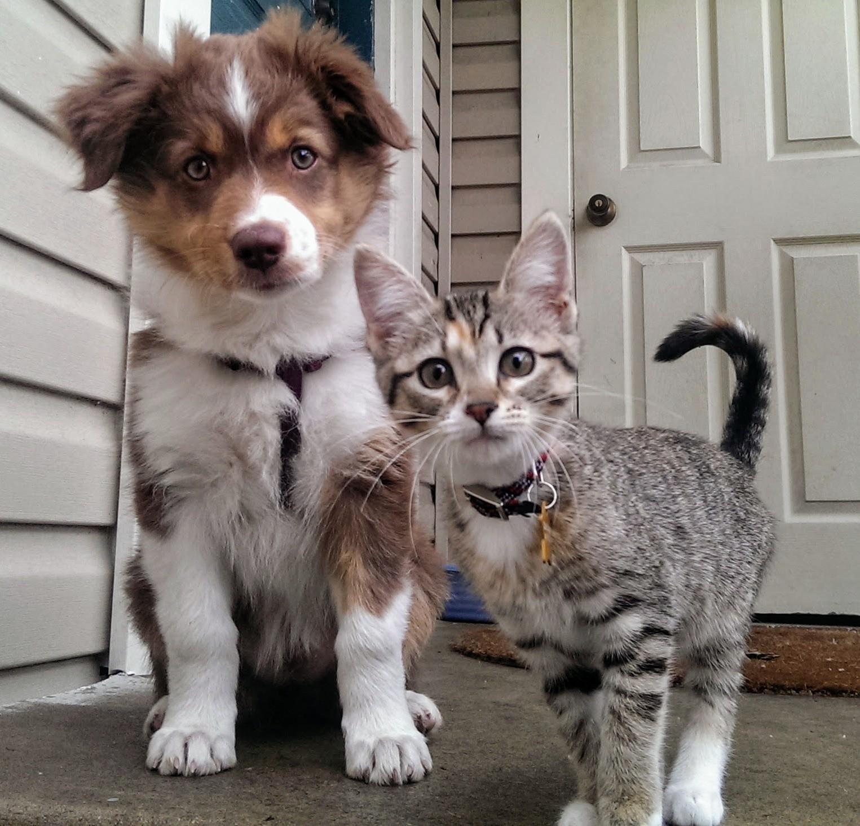Картинки с приколами собаками и котами