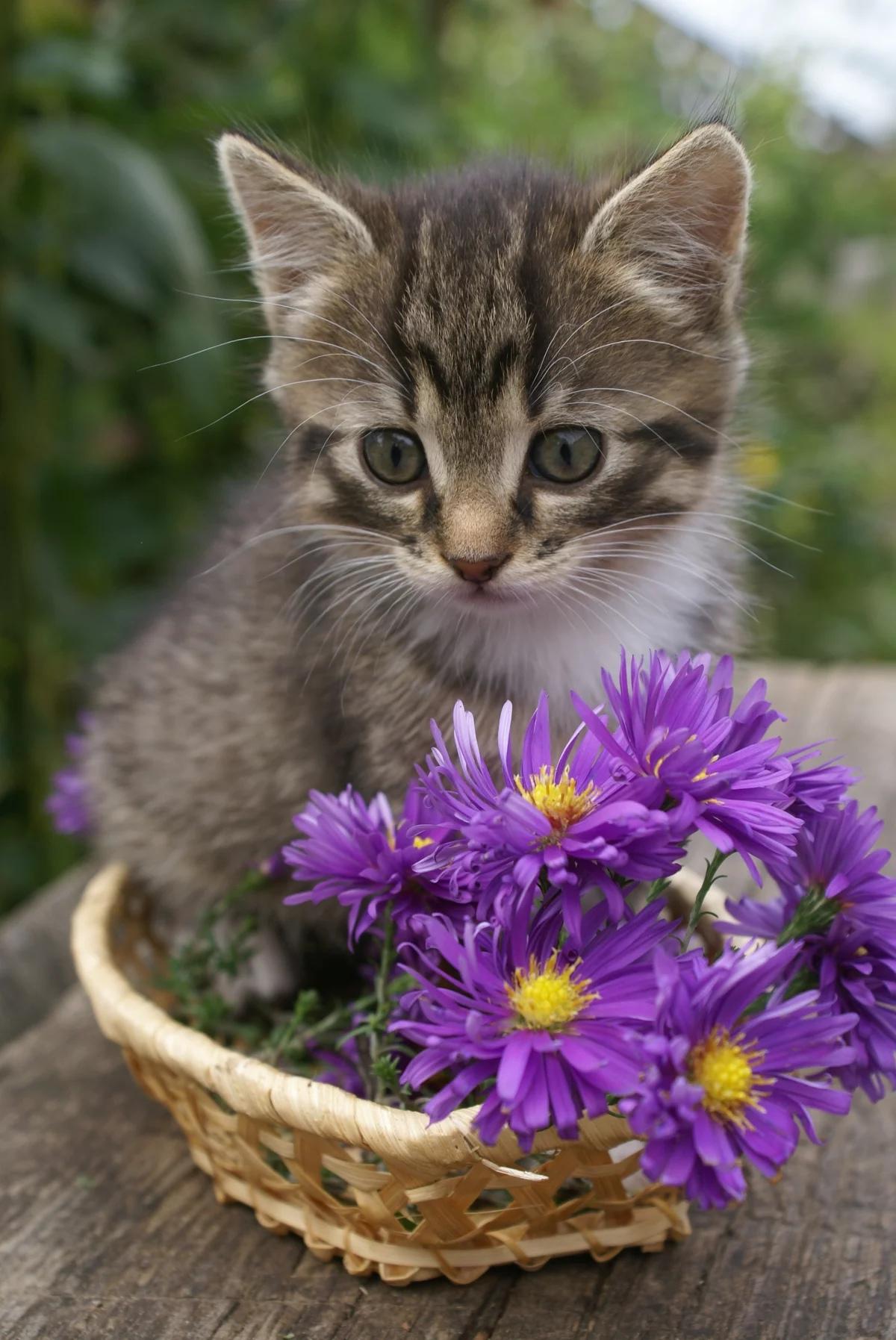 девушка была открытки с котятами и цветами даже печатать полно