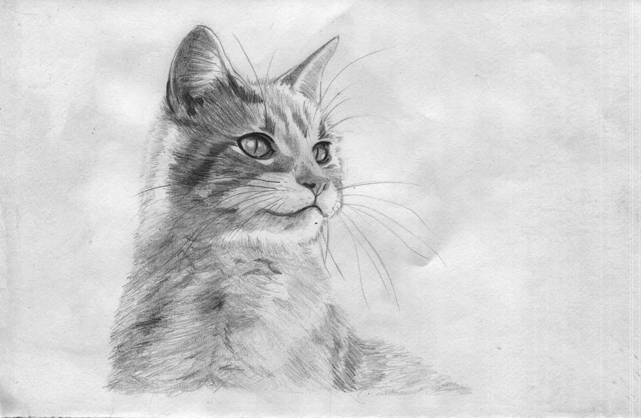 рисунки кошек и кошек картинках, фото рисунках