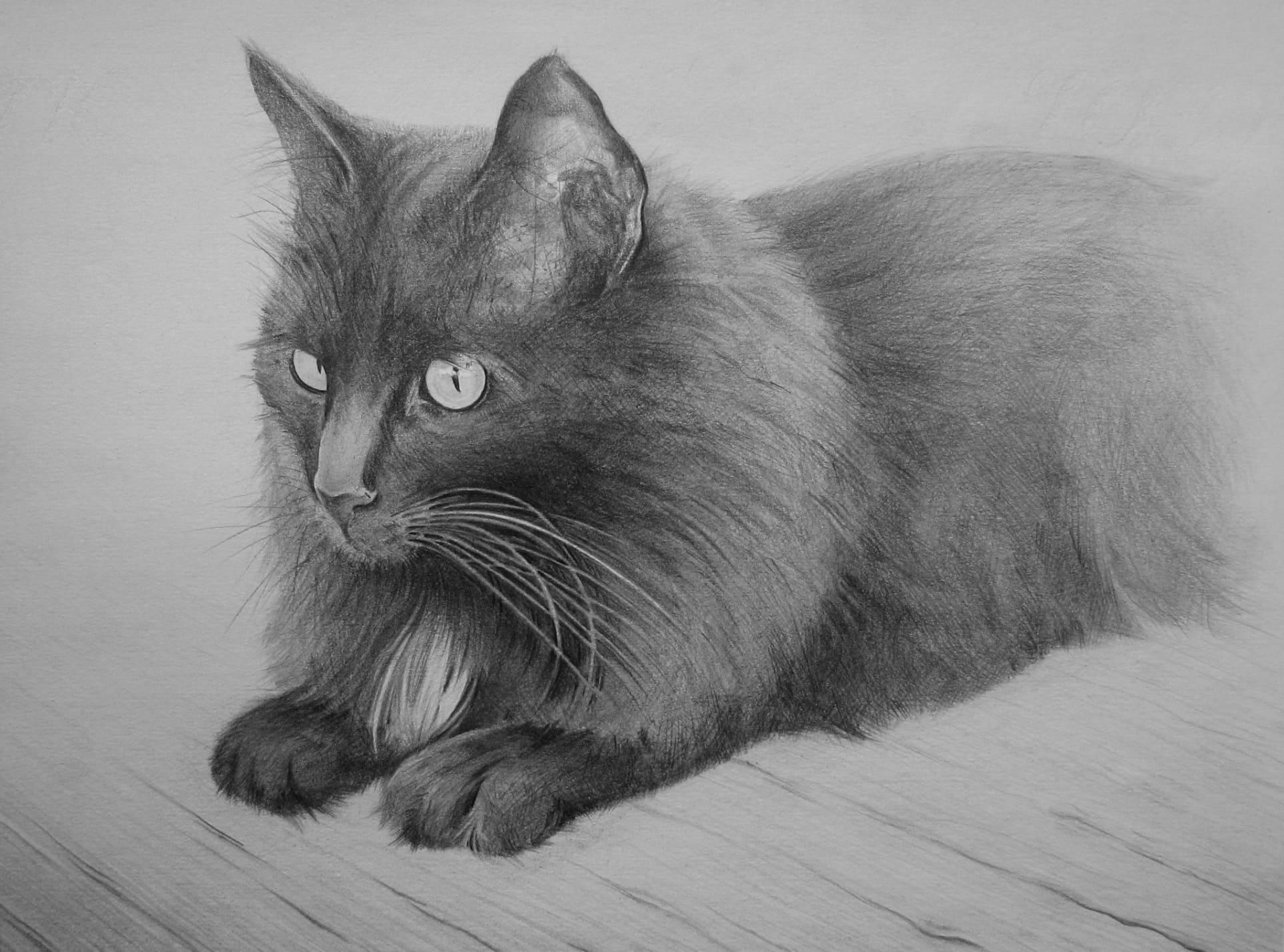 изображение кошки рисунок наличии