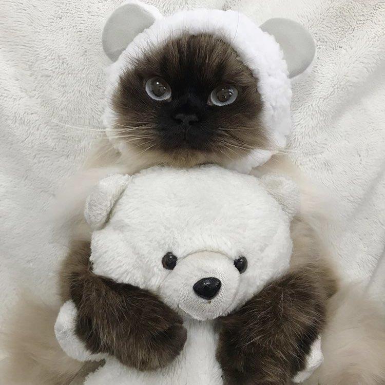 картинки котиков и мишек стоит помнить