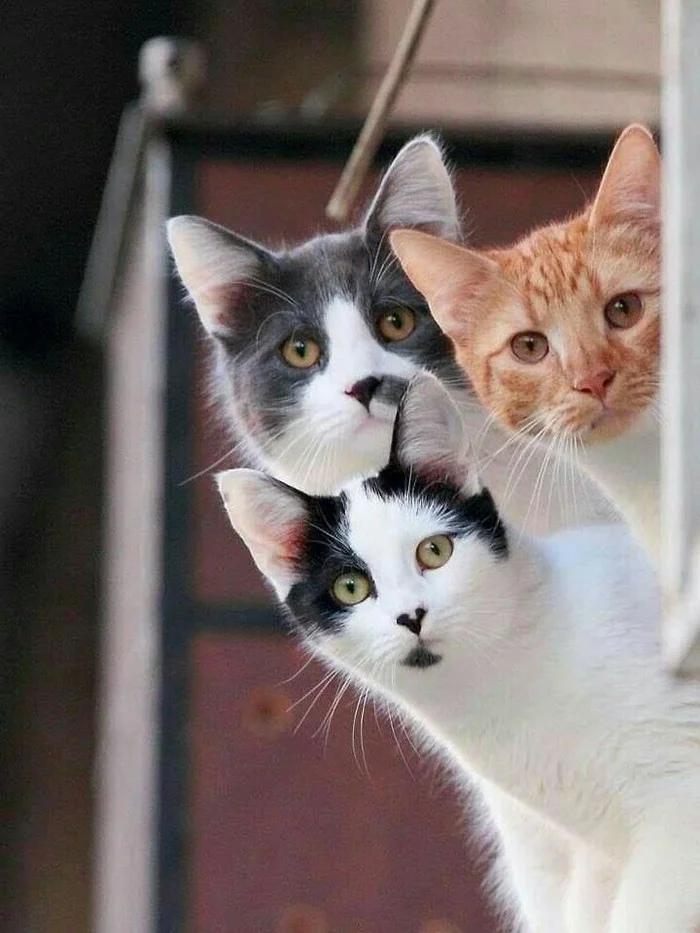 Картинка с тремя кошками